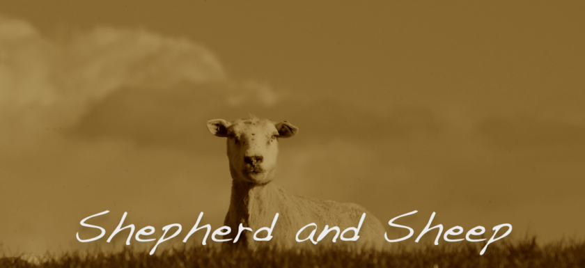 sheep devotions for teens